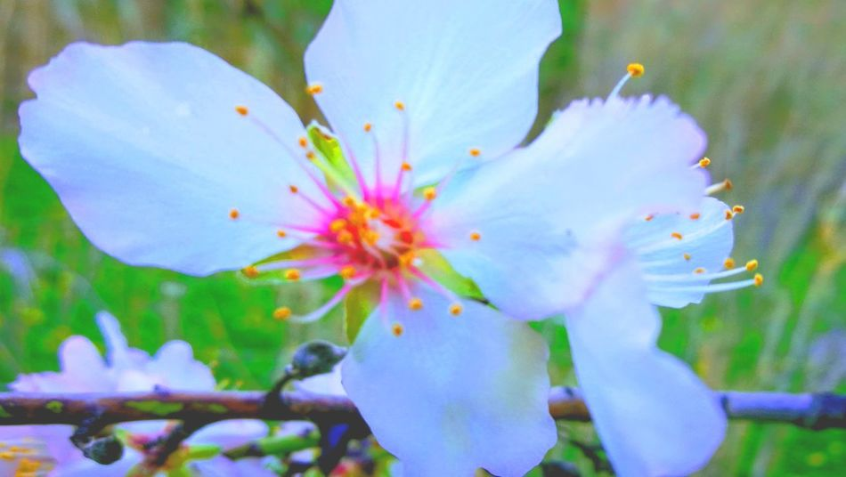 Flower Nature No People Day Outdoors Plant Close-up
