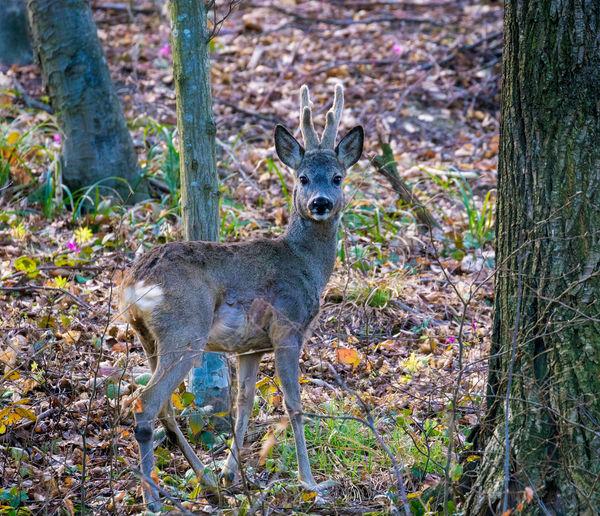 Portrait of deer in forest