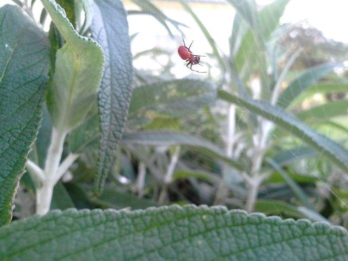 Redspider Red Spider Spiderweb EyeEm Nature Lover Nature_collection