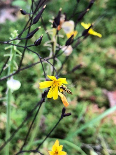 花 Plant Flowering Plant Yellow Freshness Beauty In Nature Fragility Nature Flower Head