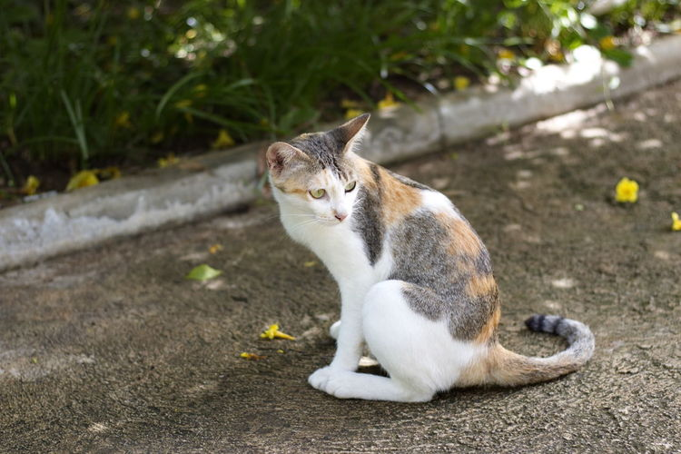 Animal Animal Themes Cat Day Domestic Domestic Animals Domestic Cat Feline Focus On Foreground Looking Looking Away Mammal Nature No People One Animal Pets Plant Relaxation Sitting Vertebrate Whisker