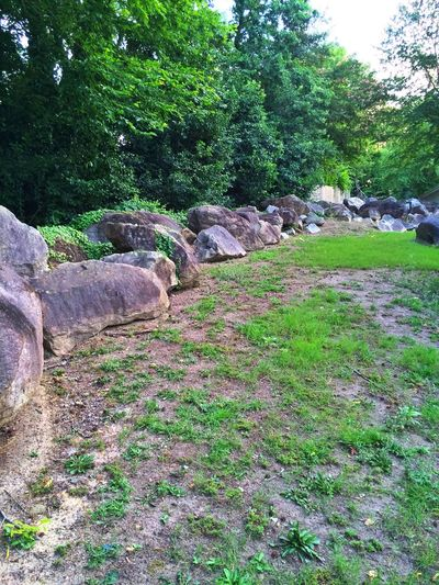 Trail Nature Nature_collection Nature Photography Reserve At Mill Landing Life Boulders Summer Nature Ambiance Lexington South Carolina