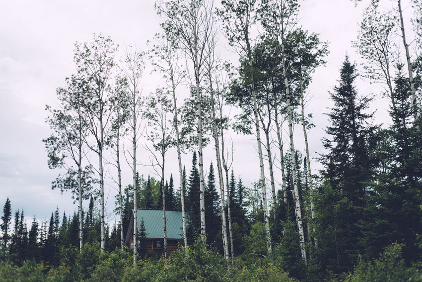 High Trees Beauty In Nature Cabin Day Forest Growth Nature No People Outdoors Scenics Sky Tall Trees Tree