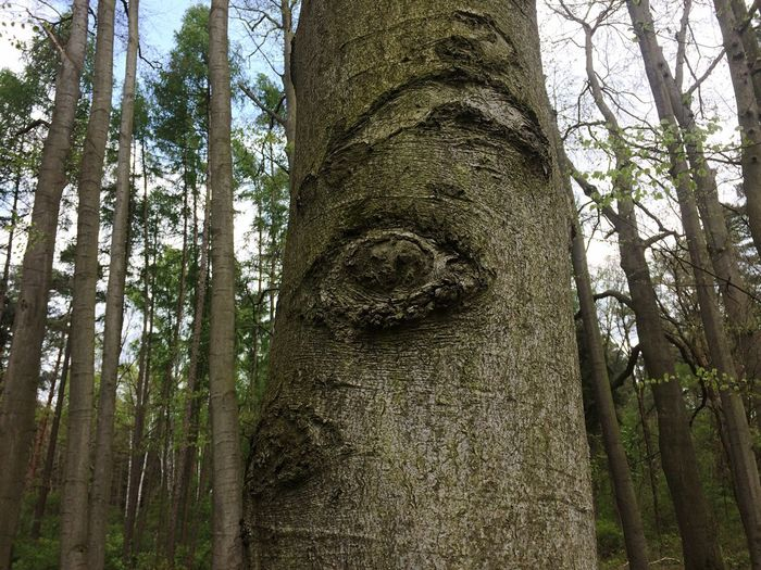 the eye of the forest Tree Plant Trunk Tree Trunk Low Angle View No People Nature