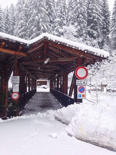 Colonnade Wood Tunnel Winter Wintertime Snow Snowing White Nature Weather Architecture Südtirol South Tyrol Tree Alto Adige Trentino Alto Adige Cold Temperature Italy Welschnofen Nova Levante Bolzano - Bozen Bolzano