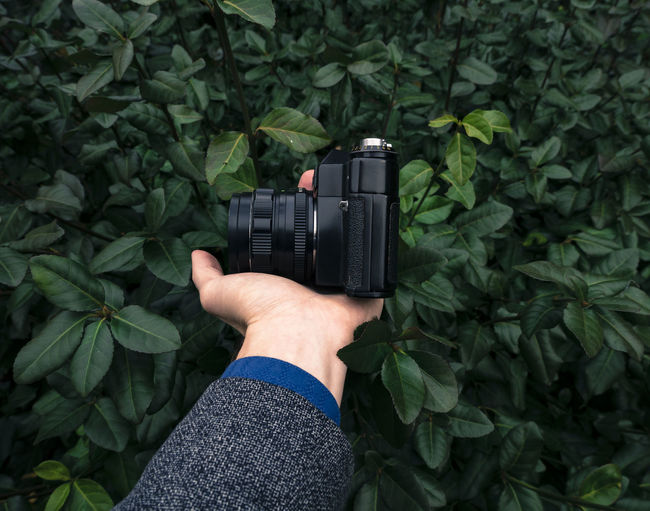Cropped Hand Holding Camera By Plants