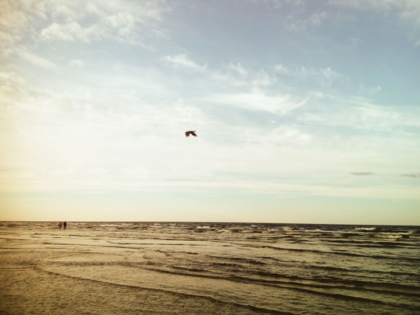 Beach Bird Sea Nature Sky Horizon Over Water Flying Scenics Beauty In Nature Day Tranquility Water No People EyeEm Best Shots Summer EyeEm Selects Eyem Gallery Waterscape Water Surface Latvia Background Photography Seascape Photography Sea Background Baltic Sea Breathing Space