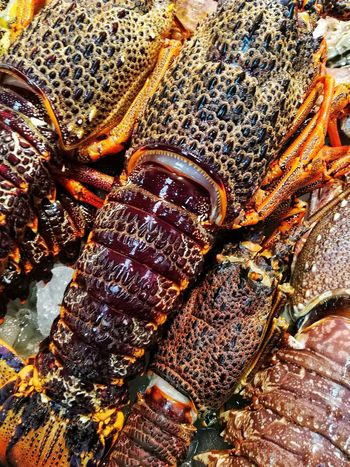 High Angle View Full Frame Food Close-up Catch Of Fish Lobsters SEAFOOD🐡 Seafood Market Warm Colors Fullframe Freshness Huawei P9 Photos Indoors  Market Healthy Eating Market Stall Abstract