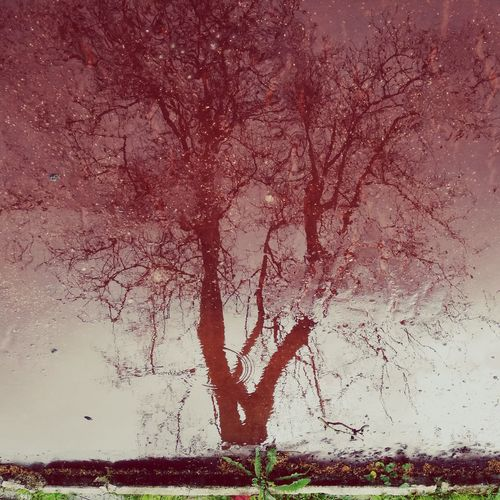 Magenta Tree