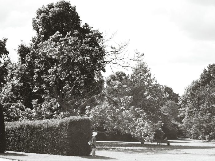 Garden Tree Big Tree Tranquility Nature Park Woman Kew Gardens London Lon Black And White Monochrome Photography Woman Portrait Woman Who Inspire You Woman Of EyeEm Womanstyle London Lifestyle Black And White Snap A Stranger