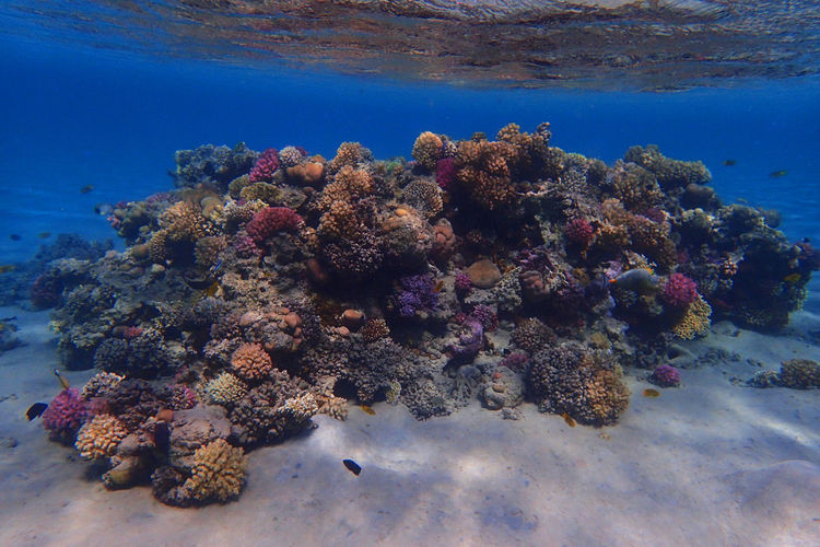 Low angle view of coral in sea