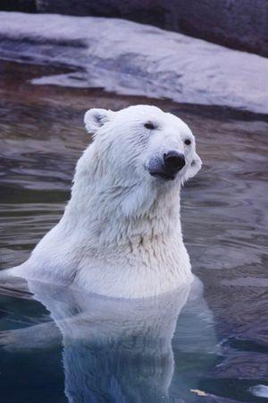 Nature Bear Zoo EyeEmRussianTeam