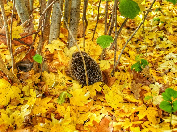 Sonic the Hedgehog Taking Shelter in the Yellow Leafs