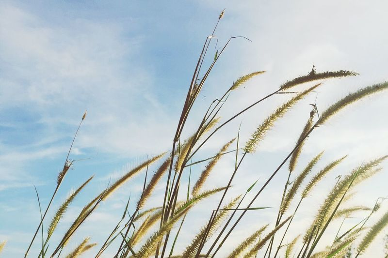 Wind Windy Grasses Sky Nature Summer Spring Freedom Be Free Take A Rest Relaxing Chilling Missing You Feeling Good Flow  Let It Go Let It Be Weather