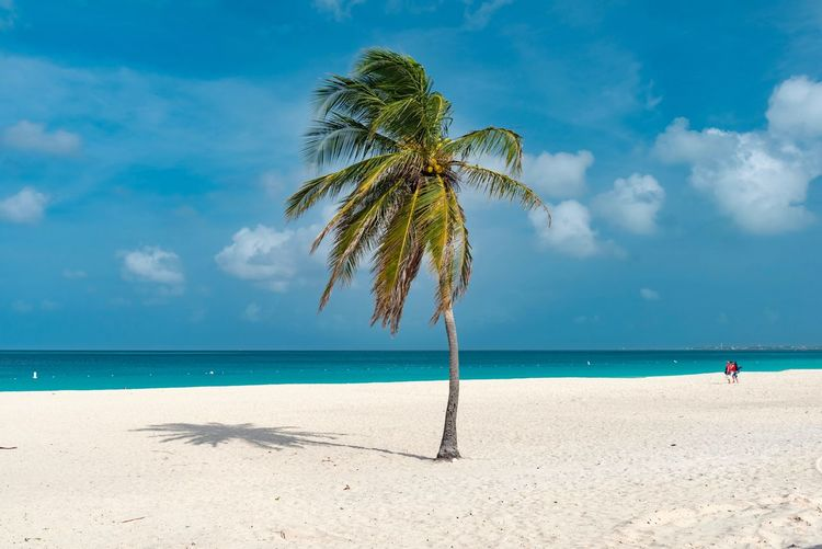Beach Beauty In Nature Cloud - Sky Day Horizon Over Water Nature No People Outdoors Palm Tree Sand Scenics Sea Sky Tranquil Scene Tranquility Tree Vacations Water