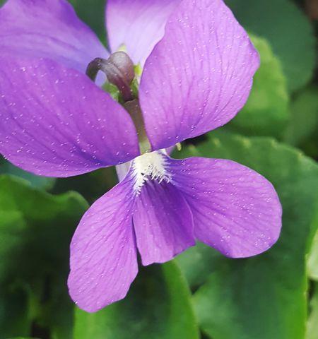 Flower Water Petal Iris - Plant Pink Color Plant