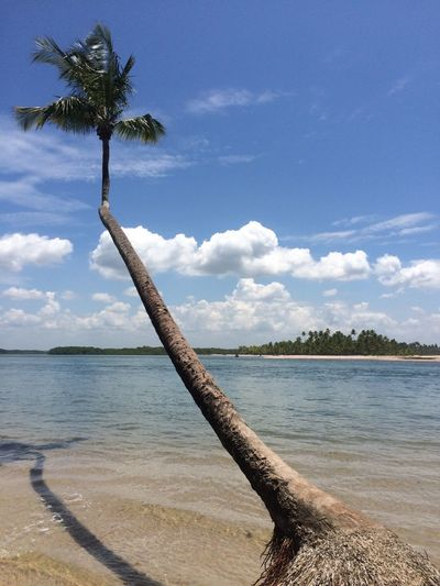 Bahia Brazil Beach Water Tree Sea Sky Cloud - Sky Sand Nature Tranquil Scene Palm Tree Day Beauty In Nature Outdoors Tranquility Scenics No People
