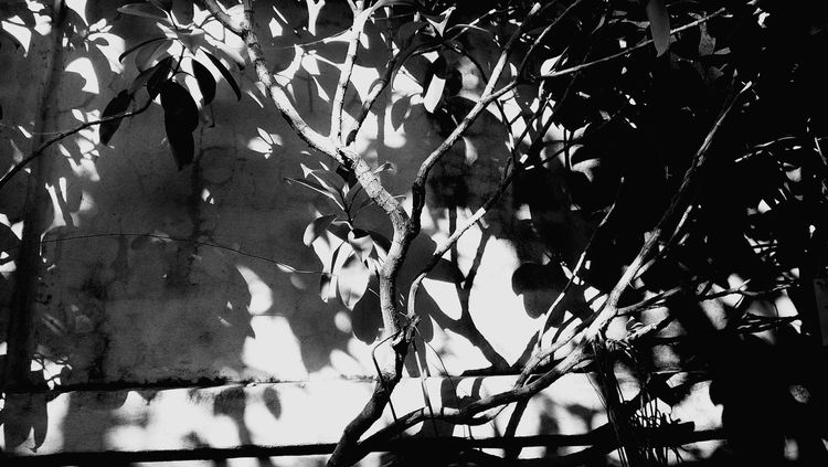 Nature Leaf Plant Growth No People Tree Water Outdoors Beauty In Nature Branch Backgrounds Day Close-up Tree Black And White Tree Silhouette The City Light