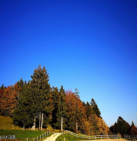 Autumn Colors Huaweip10plus Forest Photography Nature Collection Outdoors Tranquility Tree