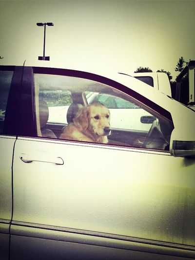 some dog waiting for their friend at kroger. : ) Taking Photos