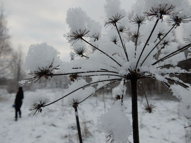 Beauty In Nature Close-up Cold Fragility Frozen Nature Outdoors Plant Snow Snow Covered Winter