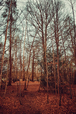 Beauty In Nature Day Dense Woodland Forest Landscape Lots Of Leaves Nature No People Outdoors Portrait Scenics Silver Birch Sky Tranquility Tree Vibrant Color WoodLand