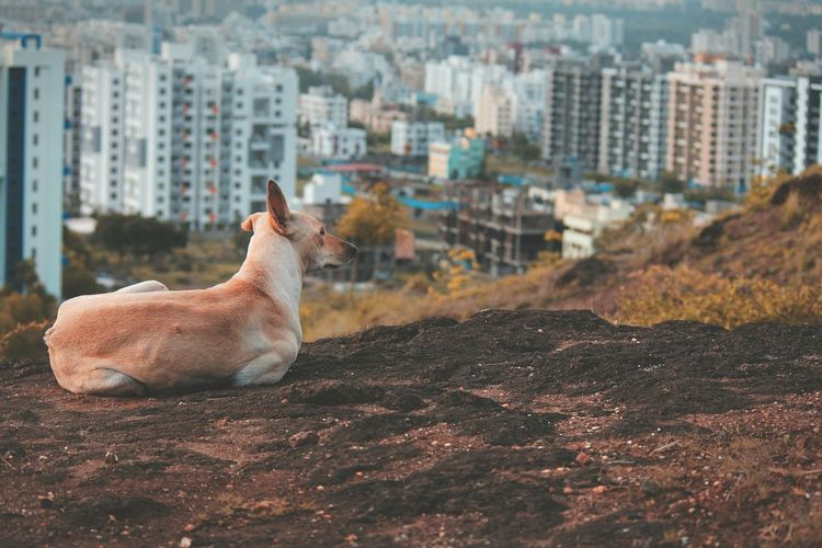 Close-up of dog sitting on field with buildings in background