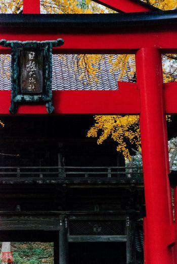 鳥居と銀杏 Shrine Shinto Shrine TORII Ginkgo Autumn Autumn Leaves Yellow Leaves Fall Fall Beauty