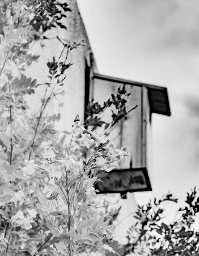 Bird house behind some vines. Surreptitious Night Outdoors Eyemphotography Photography Thephotographer Tucson Arizona  Birdhouse Vines Monochrome Black & White