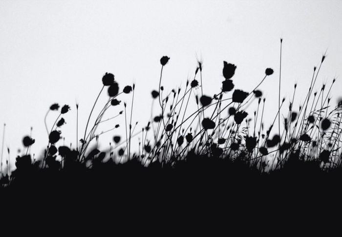 Blackandwhite Flowerporn Bw_collection EyeEm Nature Lover