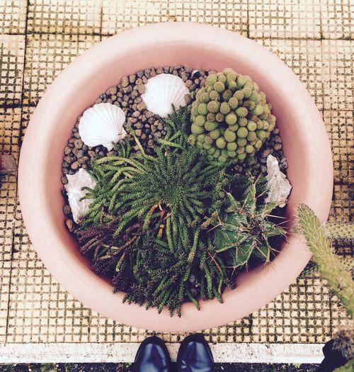 Overhead View Of  Of Flower Pot