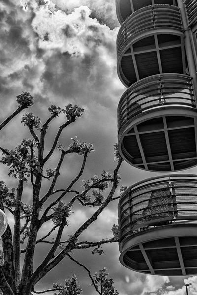 Architecture Bare Tree Black & White Bristol, England Building Built Structure City Cloud Cloudy Day Landscape Low Angle View Modern Nature No People Outdoors Sky Tall - High Urban