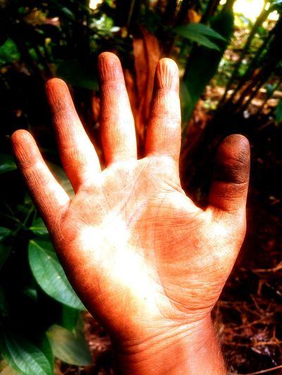 A Farmer's pure hand Farmer's Life Farmer Farmer's Hand Pure Not Dirty Sunlight Human Body Part Human Hand Outdoors Day People