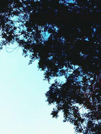 Beautiful Morning Sky 🌼 First Eyeem Photo