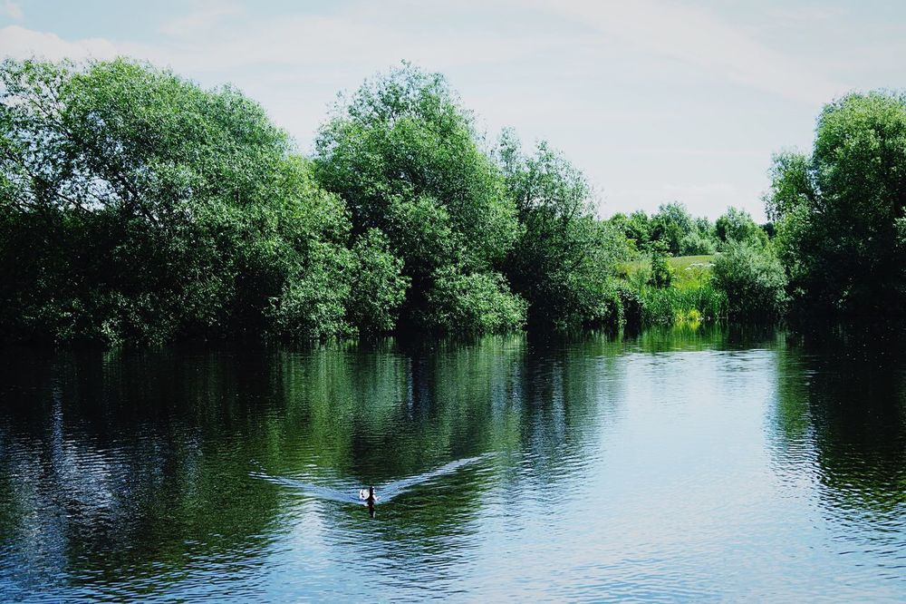 Green Duck Trees Water River Nature Day Peaceful Beauty One Animal Sky Swimming Water Ripples Ripple Effect Scenery Animal Photography