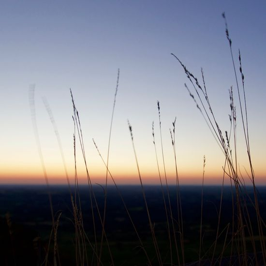 Close-up of silhouette grass against sky during sunset