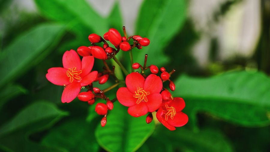 Beautiful colorful flower Red Flower Outdoors Freshness Nature Beautifulflower  Colorfulflower Flora Floral