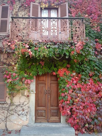 Ivy Covered Ivy Leaves Langhe Autumn Autumn Colors Autumn Leaves Door Closed Plant Entrance Flower Outdoors Architecture Built Structure Building Exterior Growth Day Ivy No People Nature Doorway Entry Beauty In Nature Close-up