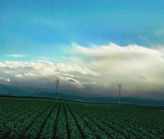 Sky Agriculture Field Cloud - Sky Growth Landscape Beauty In Nature Rural Scene Nature Tranquility Scenics Multi Colored Outdoors Tranquil Scene No People Day