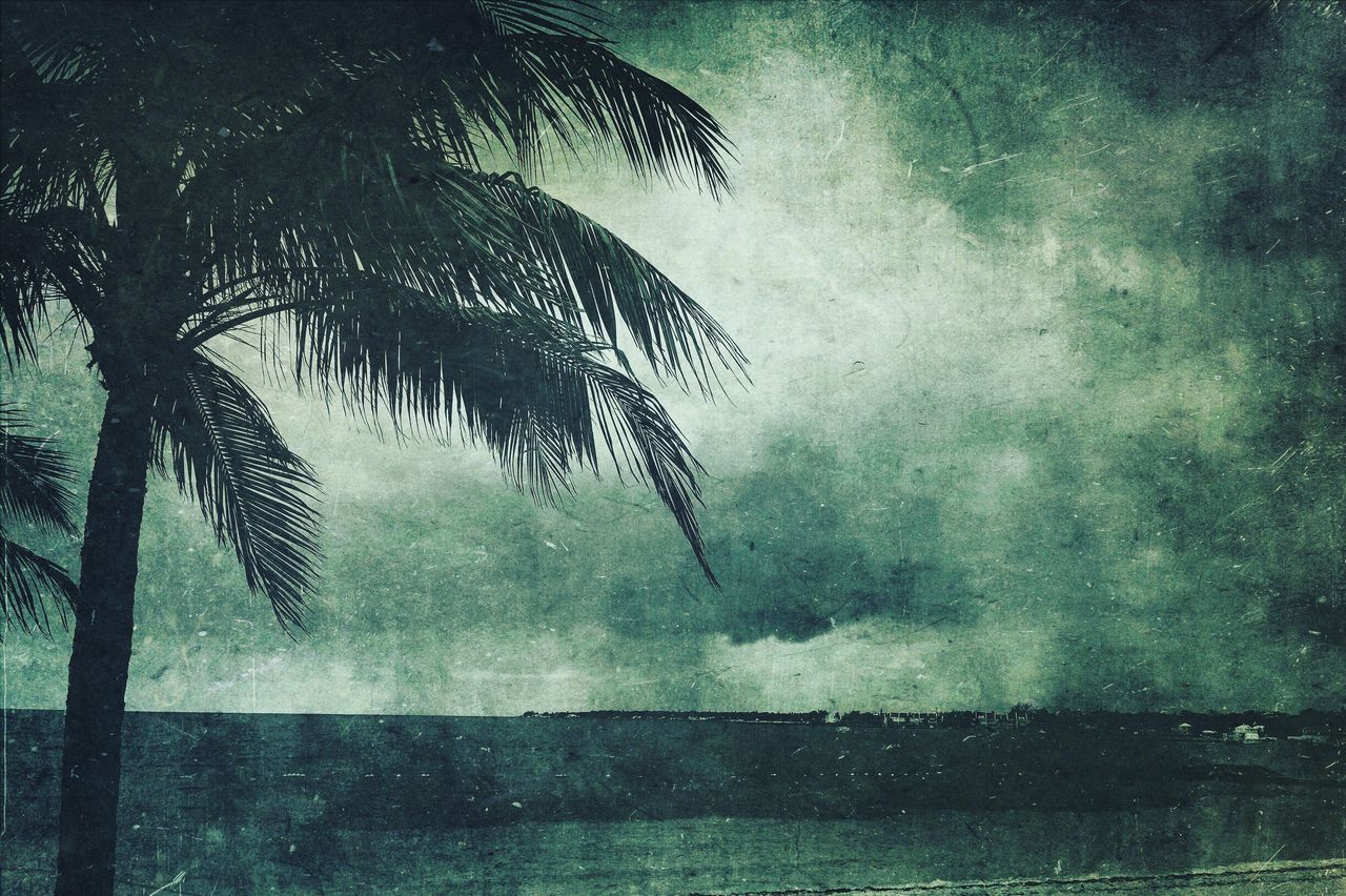 palm tree, tree, nature, weather, no people, beauty in nature, scenics, outdoors, tranquil scene, growth, day, leaf, water, storm cloud, branch, sky
