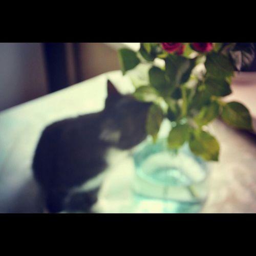 Catsandroses