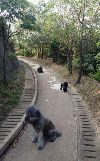 Trigo Dog again... Walking Around