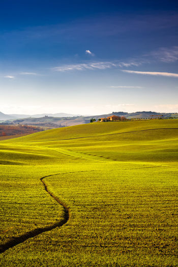 Val d'Orcia, Tuscany, Italy Italia Toscana Tuscany Agriculture Beauty In Nature Cloud - Sky Day Environment Field Grass Green Color Idyllic Italy Land Landscape Nature No People Outdoors Plant Rolling Landscape Rural Scene Scenics - Nature Siena Sky Sunlight Tranquil Scene Tranquility Val D'orcia