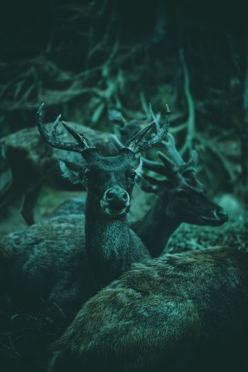 Full frame shot of deer in forest at night