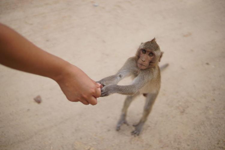 Cropped hand holding monkey
