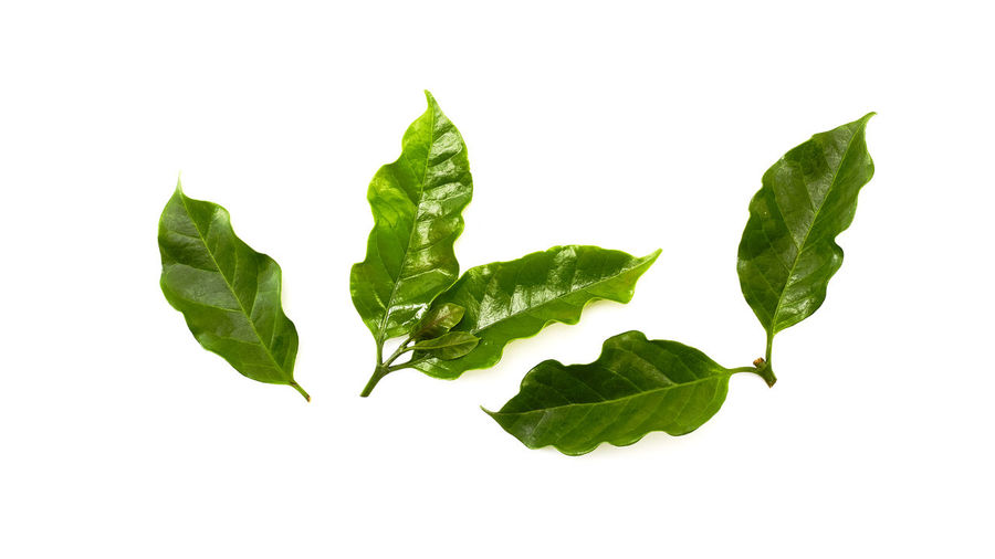 Close-up of leaves against white background