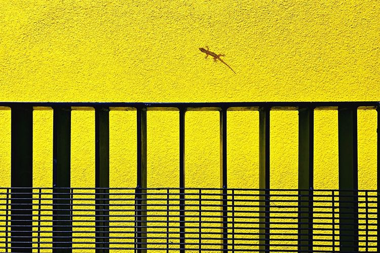 Close-up of lizard on yellow wall