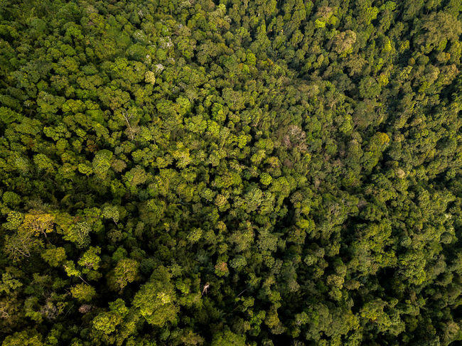 DJI X Eyeem Drone  Backgrounds Beauty In Nature Day Dronephotography Forest Freshness Full Frame Green Color Growth Lush Foliage Nature No People Outdoors Plant Skypixel Tea Crop Tree