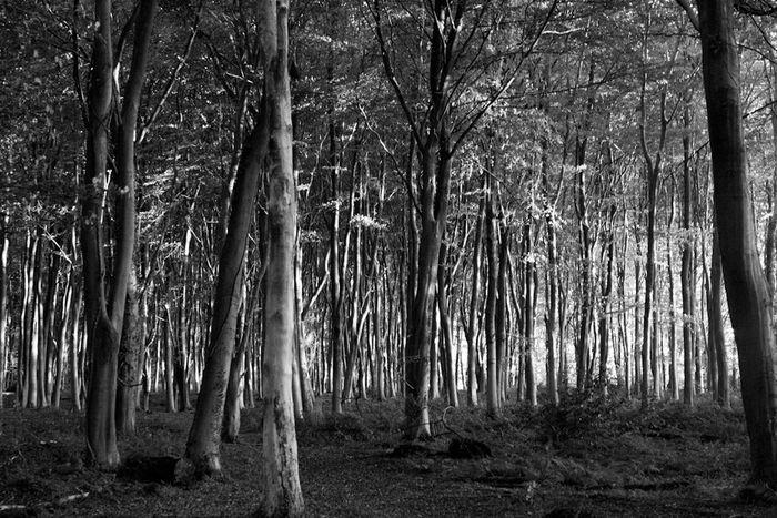 Trees Night Lights