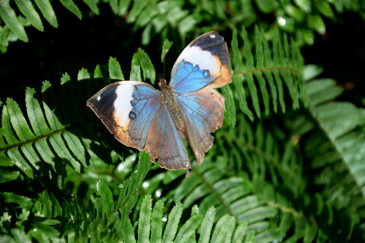 Fragility. Animal Animal Themes Animals In The Wild Beauty In Nature Butterfly - Insect Close-up Day Fragility Green Color Growth Insect Leaf Nature No People One Animal Outdoors Plant